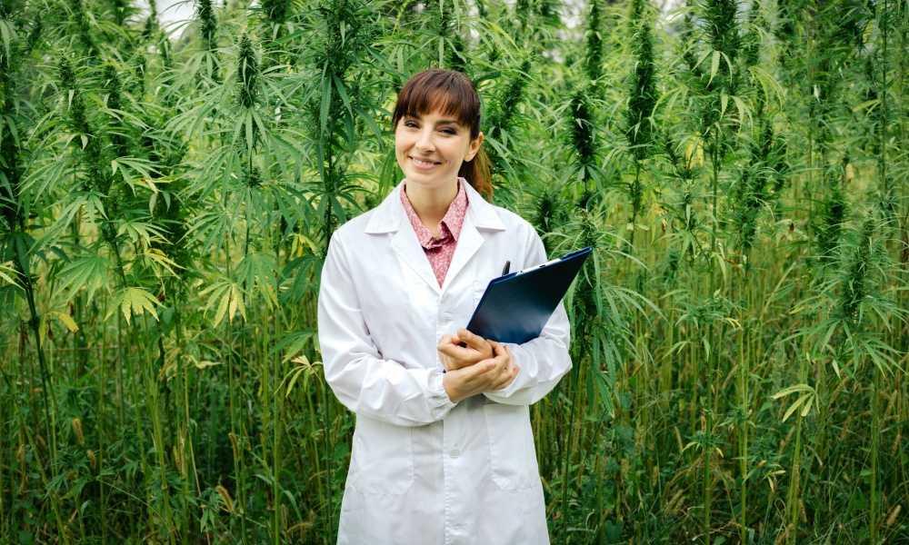Las Vegas Marijuana Law