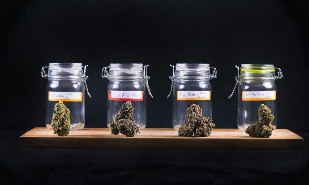 wide selection of marijuana strains