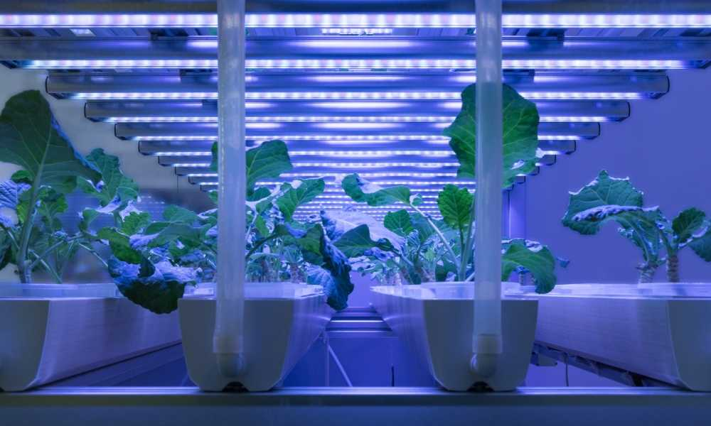 plants on artificial light