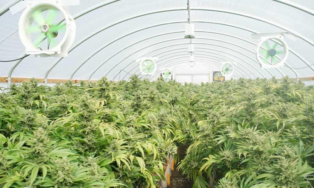 Medicinal Marijuana in British Columbia