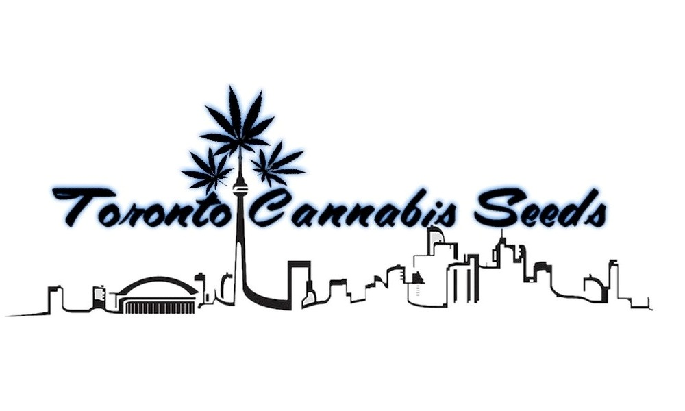 Toronto Cannabis Seeds