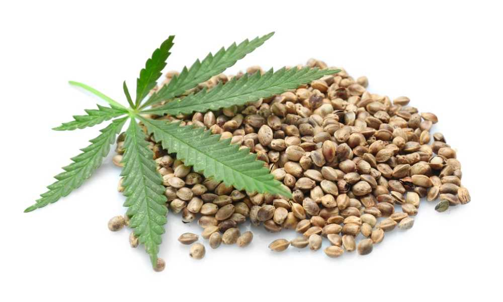 Feminized Seeds with hemp leaf