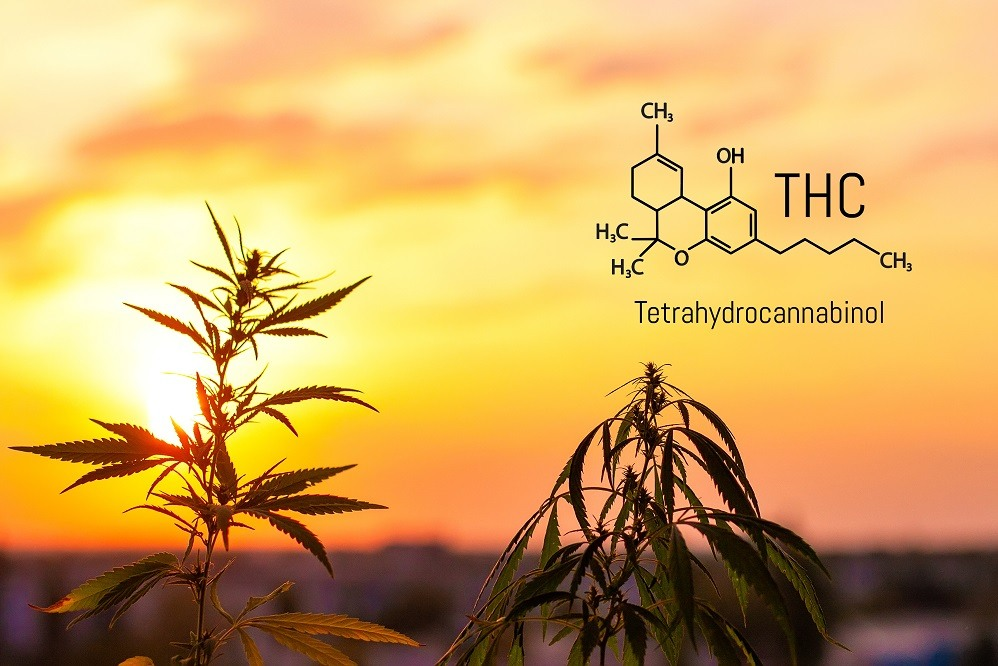 CBD chemical formula with hemp leaves