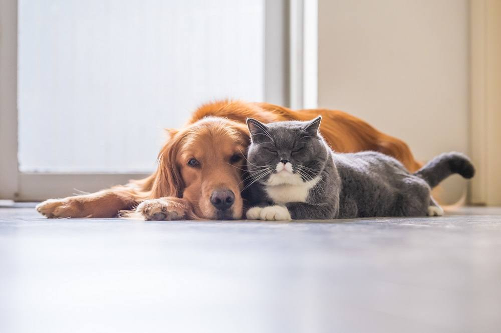 cute cat and dog beside each other