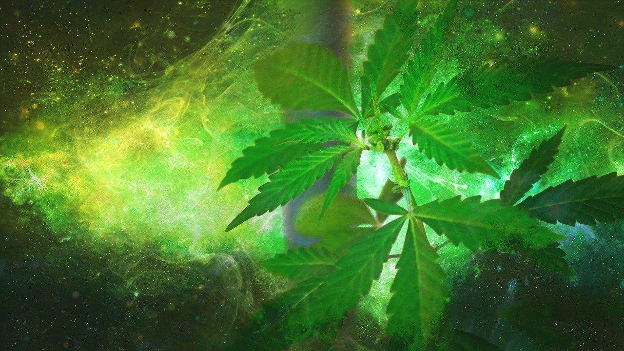 marijuana-1910598_1280